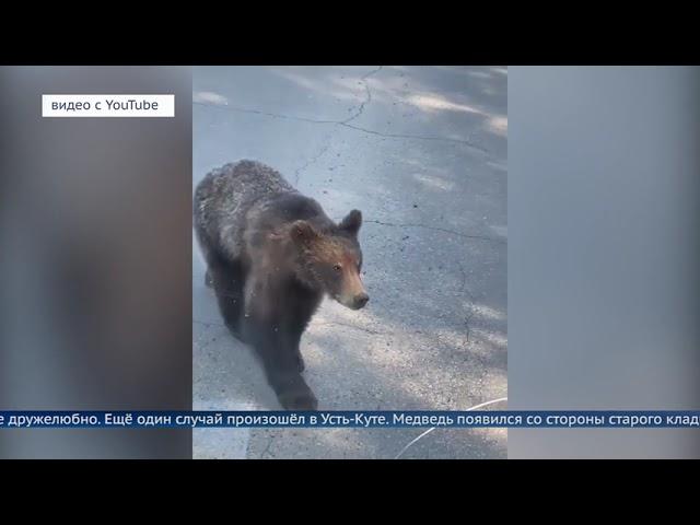 В Приангарье нашествие медведей