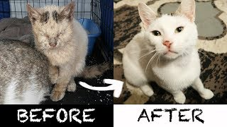 2 AMEOWZING Homeless Cat Transformations!