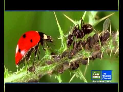 Diagnostics di parassiti fungosi di virus
