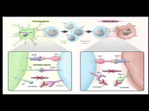 Enterobiasis etiology