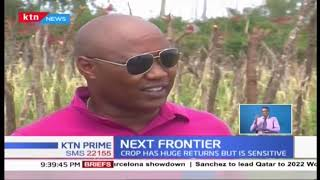 Money minting season for tomatoes farmer in Kajiado County | THE NEXT FRONTIER