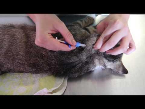 Katzenkastration