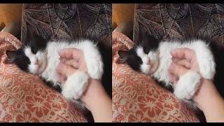 Lazy CAT 3D ! Cat Rest !3d vr video ( Google Cardboard )