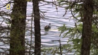 Дикая природа России 1 серия Сибирь HD