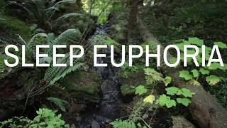 SLEEP EUPHORIA (Music version) A guided meditation to help you fall into a deep sleep