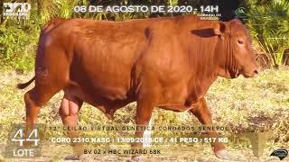 Coro 2310 b4