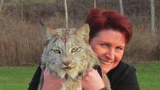 This Canadian Lynx Is Twice The Size Of A Cat  Now Watch His Reaction When A Trainer Goes To Pet Him