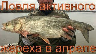 Рыбалка на раскатах в августе астрахани камызякский