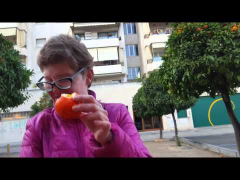 Можно ли есть апельсины с деревьев на улицах Испании?
