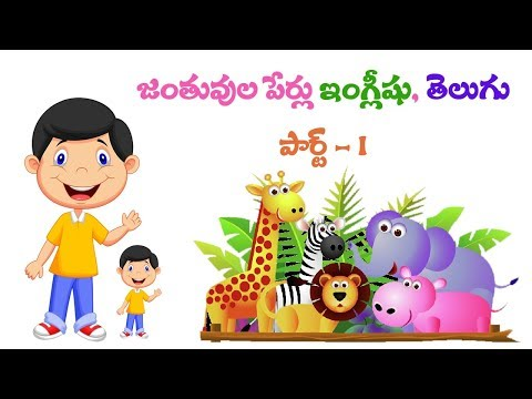 Download All Birds Names English And Telugu With Videos And Voice