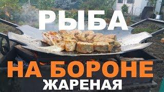 РЫБА ЖАРЕНАЯ НА БОРОНЕ СУДАК САЗАН КАРП РЕЦЕПТЫ СЮФ