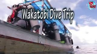 preview picture of video 'Wakatobi Dive Trip I blup blup Blup...'