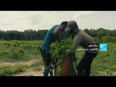 العرب اليوم - شاهد: عصابتان يسيطران على منطقة زراعة نبات