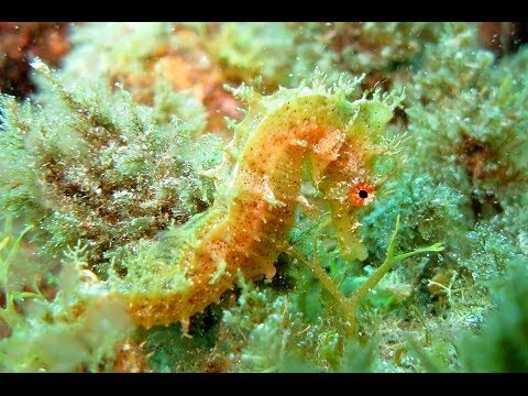 Teneriffa 2014-Tauchen mit dem Dive Center Aquanautic Club, Playa Paraiso Teneriffa,Spanien
