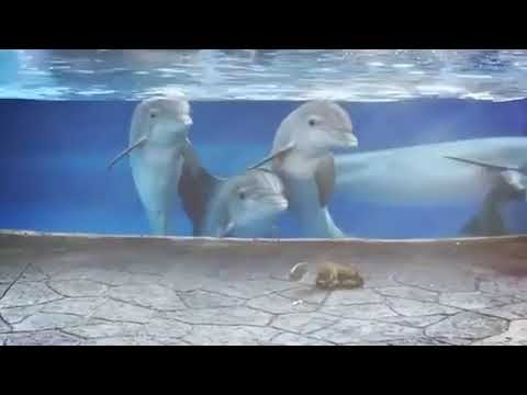Dolphins fascinated by Squirrels