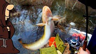 Ловля налима по открытой воде