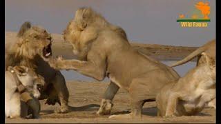 Wild Fauna / Львиная страна прайдов /Lion Country: Night and Day / Часть 2