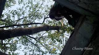 Video Michaela Budínská - Chasing Muses (the first demo)