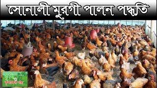 সোনালী মুরগী পালন পদ্ধতি - Poultry Farming In Bangladesh