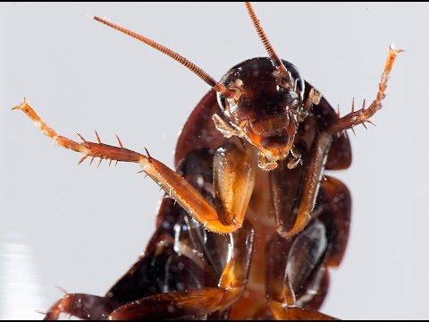 Новости науки от 17.11.2015 (укус таракана)
