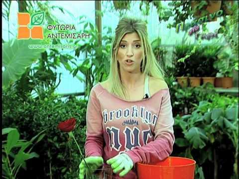 Συντήρηση λουλουδιών στο βάζο