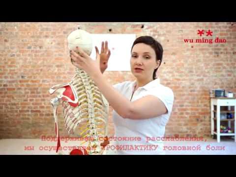 С-образный грудопоясничный сколиоз 1 степени упражнения