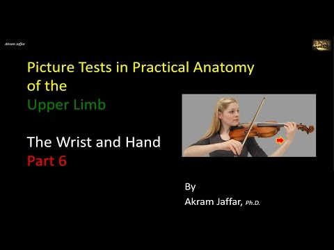 Picture Test in Anatomy Wrist and Hand 6