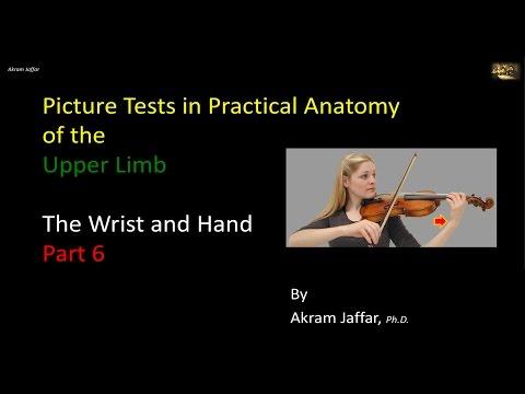 Test obrazkowy - anatomia ręki i nadgarstka część 6