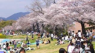 春の桜は、平和公園を悲しみから癒してくれているようです。