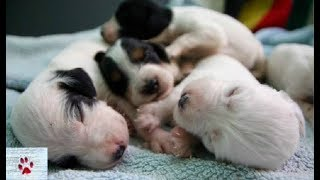 Newborn puppies and their stray mum rescued and ...look at them now!