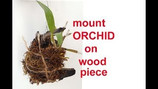 How To Grow ORCHID (dendrobium) On WOOD PIECE To Give Orchid Natural Look 4K