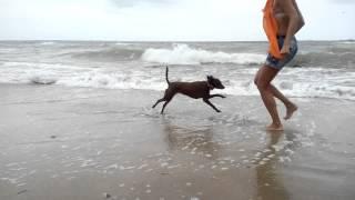 Ника на собачьем пляже в Одессе