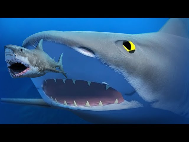 GIANT BLACK TIP SHARK! - Feed and Grow Fish - Part 78 | Pungence
