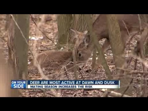 Brunswick deer-related car crashes