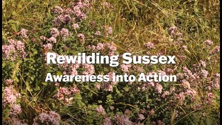 Thumbnail for Rewilding Sussex: Awareness into Action