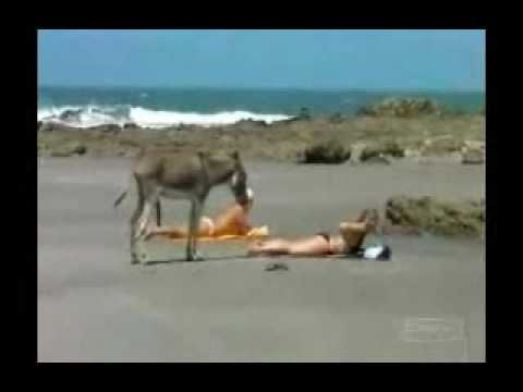 sexy woman with cypriot donkey