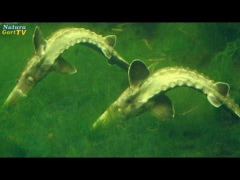 Die Prophylaxe der Würmer in den Volksweisen