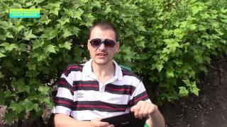 Як зареєструвати открыть ФОП (ЧП) Как зарегистрироваться предпринимателем ФЛП в Украине