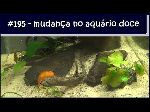 Mudanças no aquário de água doce - #EP195