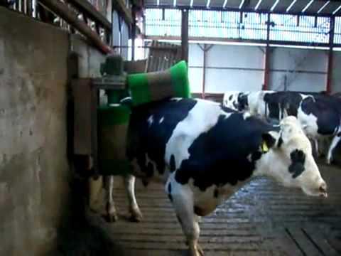 מכונה לניקוי פרות