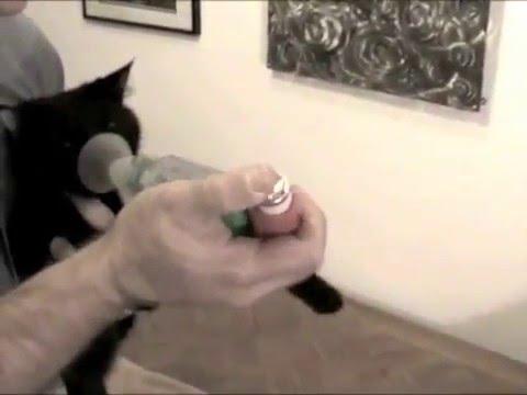 AeroKat Feline Aerosol Chamber - Replacement Mask (Small) Video