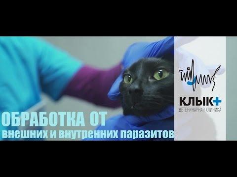 Как обнаружить лямблии у кота