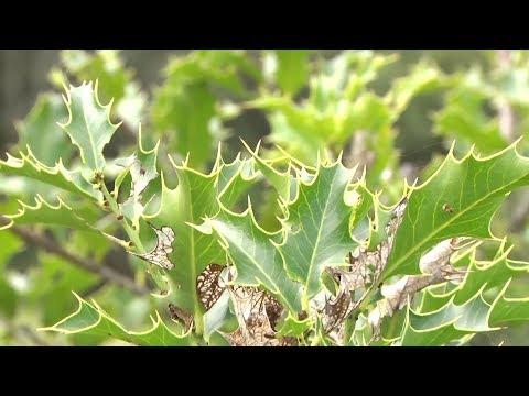 Como identificar plantas medicinais do sul do Brasil
