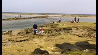 浦添西海岸道路が開通し穴場スポットだったカーミージーが丸見えになって潮干狩り客が殺到!