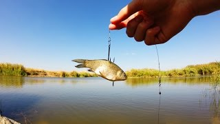 Как правильно насадить живца на крючок при ловле налимать