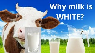 Why the colour of milk is white   Reason for white colour of milk explained