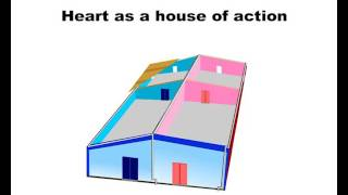 CBSE Class 10 Science Video on the bases of human circulatory system