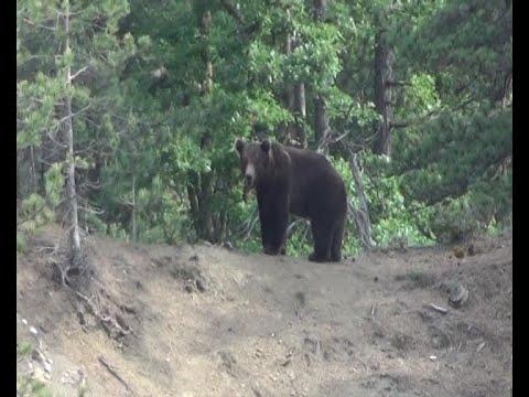 Αρκούδες επιτέθηκαν σε ανθρώπους στην Καστοριά