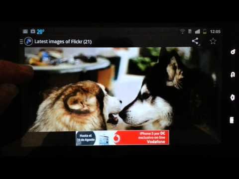 Video of Alaskan Malamute Official