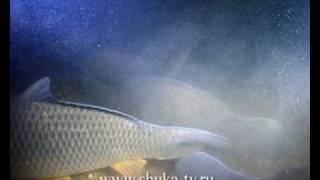 """Фильм """"Осень"""" из цикла Мир подводной охоты Часть 3"""